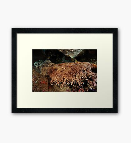 Ornate Wobbegong Shark Framed Print