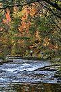 Fall Fishing by Carolyn  Fletcher