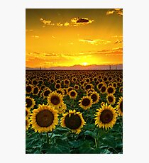 Golden August Photographic Print