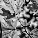Leaves in Black and White by Robin Black
