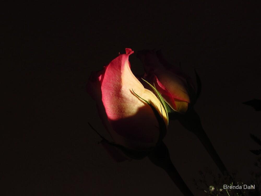 Shaded Love~! by Brenda Dahl