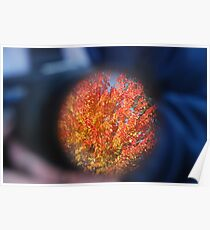 Autum through a Camera Lens Poster
