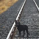 BLACK DOG GONE... by Helen Akerstrom Photography