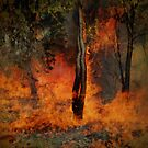 Summer Bush Fire by Eve Parry