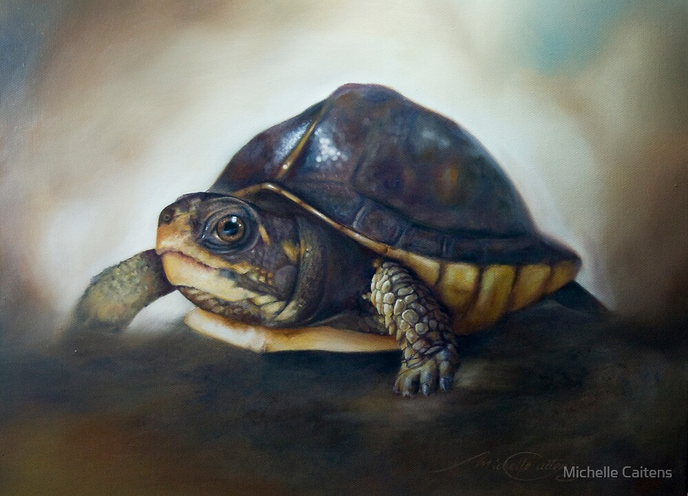 'One of the patients...' Turtle Rescue Team, North Carolina State University College of Veterinary Medicine by Michelle Caitens