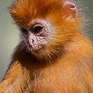 Little Orange Monkey by Vein