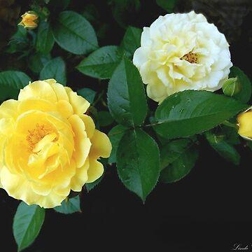 Rosa Julia Child by lindabeth