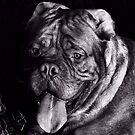 Rocki portrait by ulryka