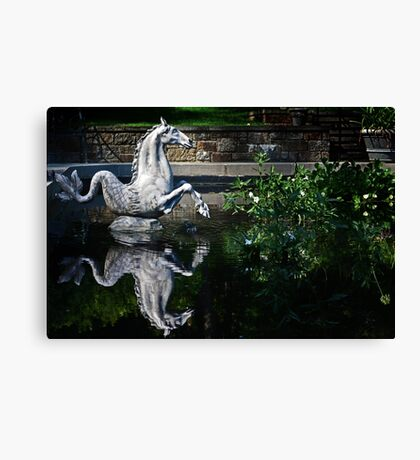Sea Horse and Reflection Canvas Print