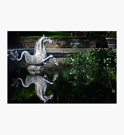 Sea Horse and Reflection Photographic Print
