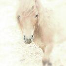 A Horses Spirit by Karol Livote