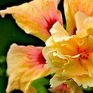 Hallelujah Hibiscus by Brenda Dow