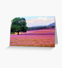 A Field of Lavender Greeting Card