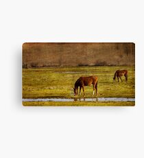 Snacking Canvas Print