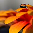 Happy Orange by Ulla Jensen