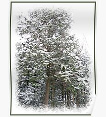 Frosty Snow Covered Pine Trees in a Scenic Wintry Forestscape after a Winter Storm in Quebec Poster