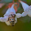 Has anyone seen my bee? by Mick Kupresanin