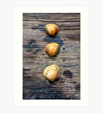 3 seashells on the seashore Art Print
