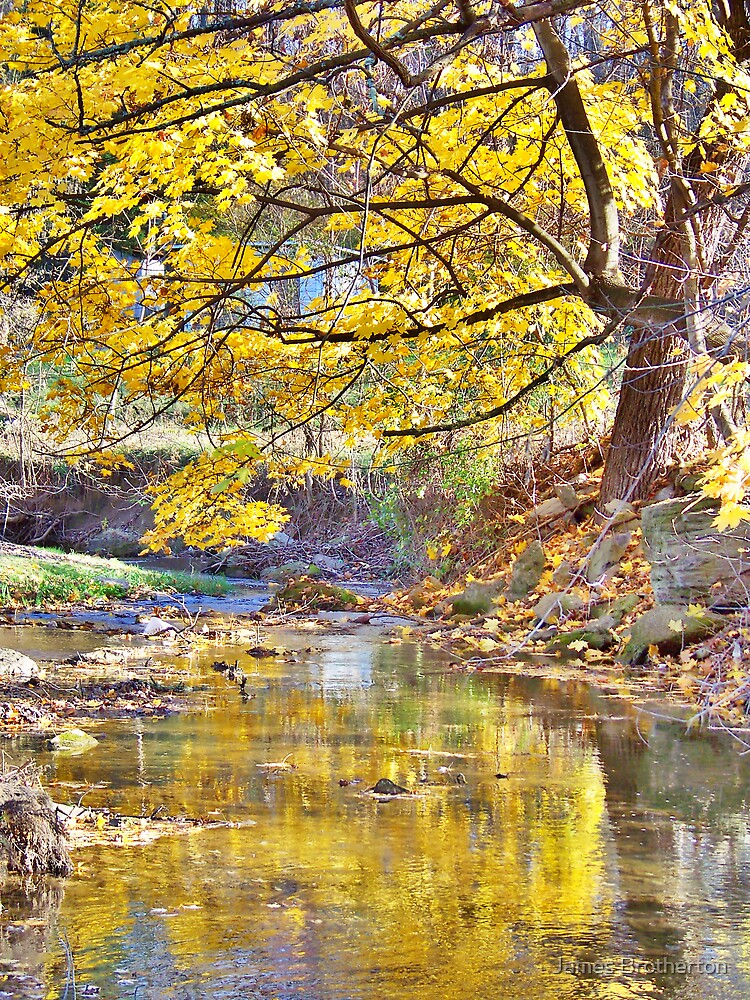 Autumn Tree And Creek by James Brotherton