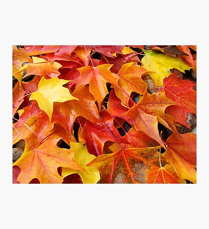 Fall Tree Leaves art prints Colorful Autumn Photographic Print