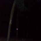 purple orb by scott hanham