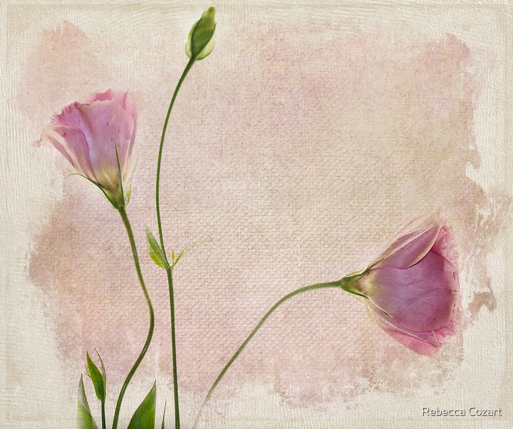 Soft by Rebecca Cozart
