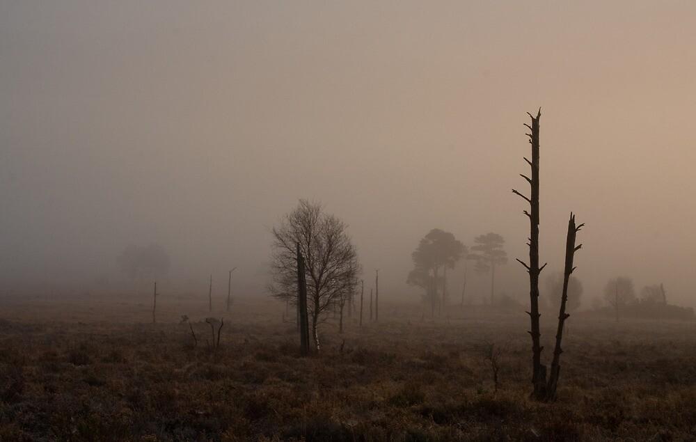 A soft morning on Holt Heath  by Jennifer Bradford