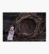 Empty Nest Photographic Print