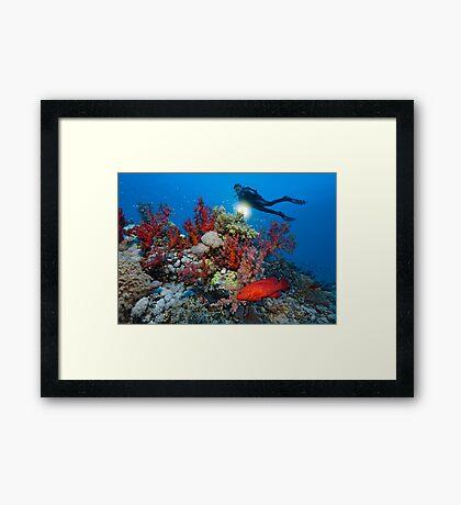 Reef Adventure Framed Print