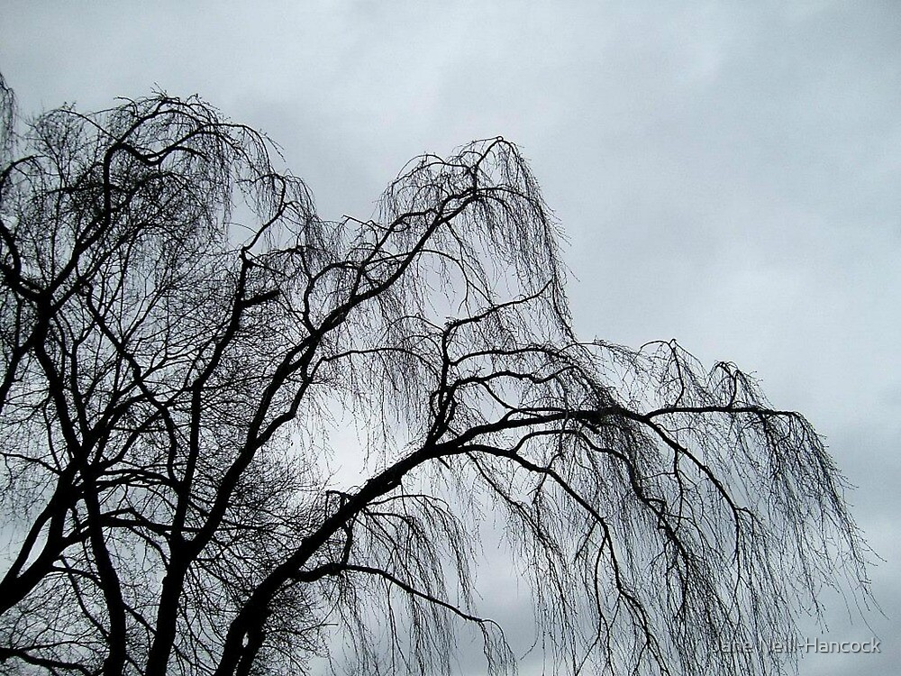 Weeping Willow Silhouette by Jane Neill-Hancock