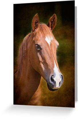 Portrait of a Horse by Chris Cobern