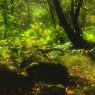 Dart Valley Woods by Alex Cassels