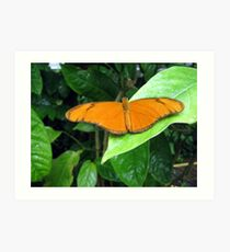 Butterfly on a leaf Art Print