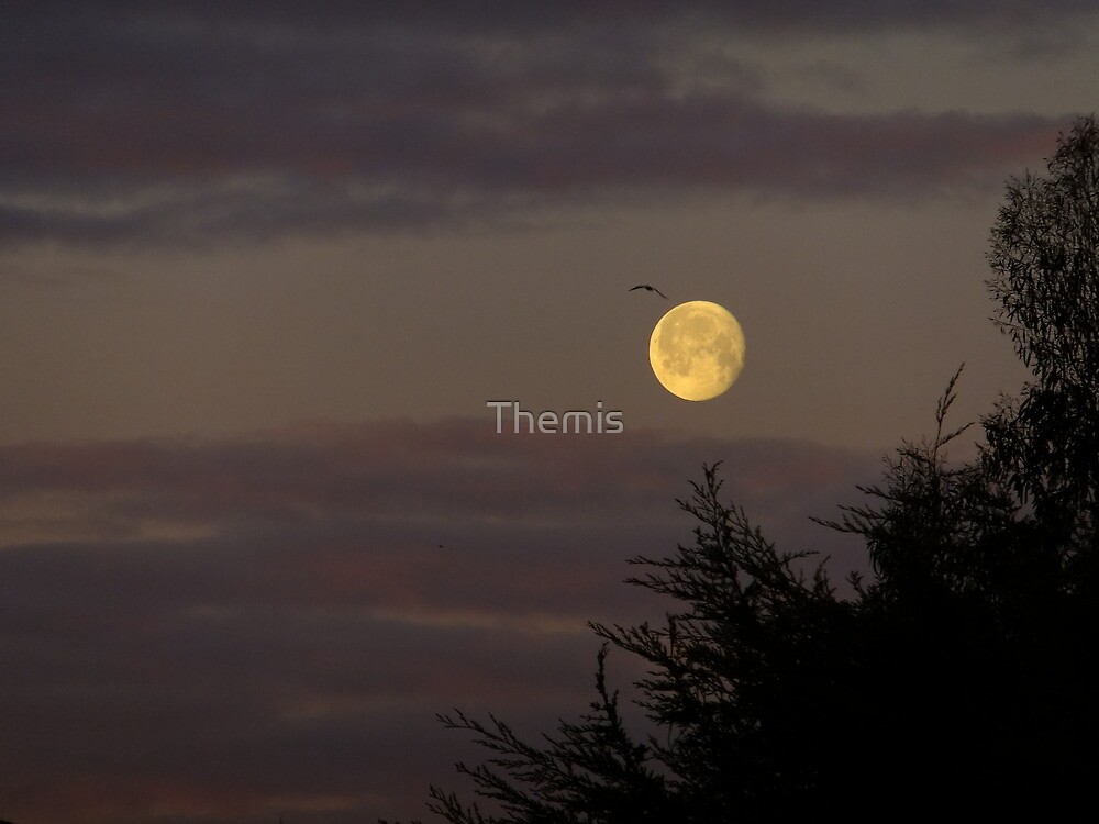 Morning Setting Moon von Themis