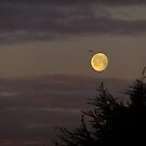 Morning Setting Moon by Themis