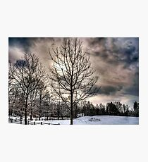 Lonely cold tree Photographic Print
