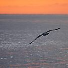 Freedom in Flight  by TerrillWelch