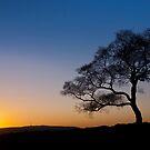 Surprise View - Lone Tree Sunset by Jon Bradbury