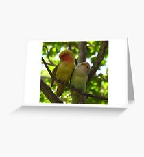 Dominican birds Greeting Card