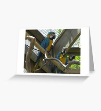 Dominican parrot2 Greeting Card
