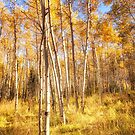 Aspens by james smith