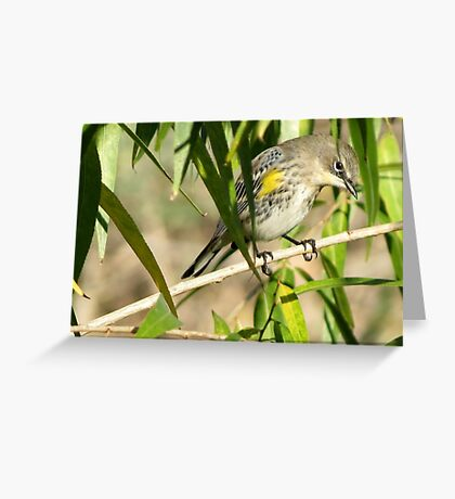 Yellow-rumped Warbler ~ Male Audubon's Greeting Card