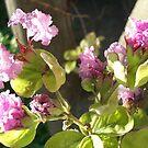 Little Flowers by Sharra Schwartz