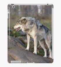 A lone timber wolf  iPad Case/Skin