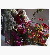 Balcony In Puerto Vallarta - Balcón En Puerto Vallarta Poster