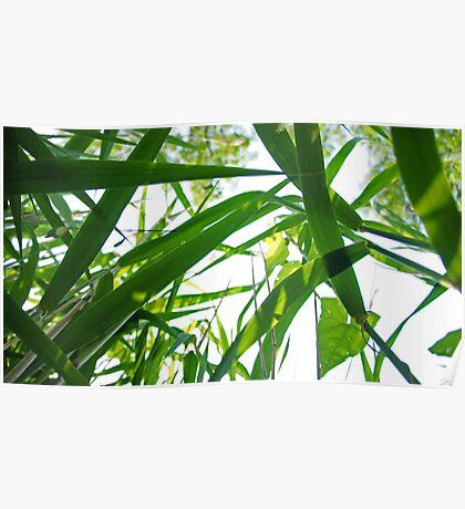 Sunlit Grass 2 Poster