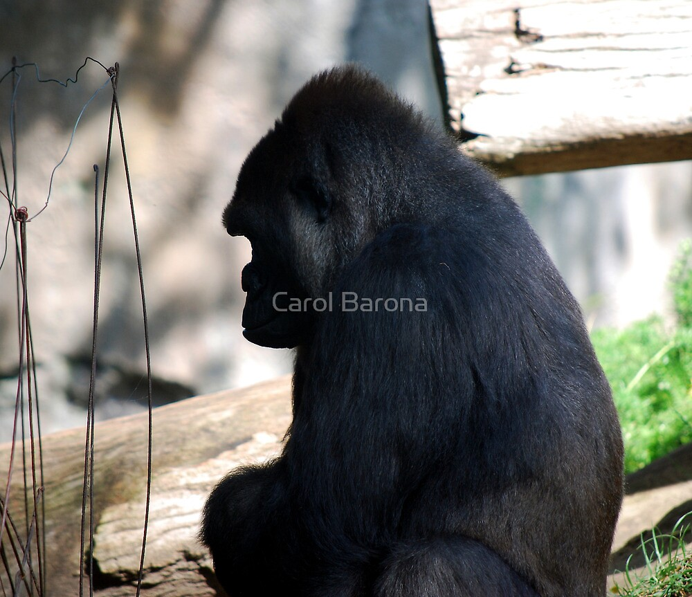 Time Out by Carol Barona