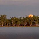 Lake Broadwater Regional Park by Robert Ashdown