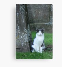 graveyard cat Metal Print