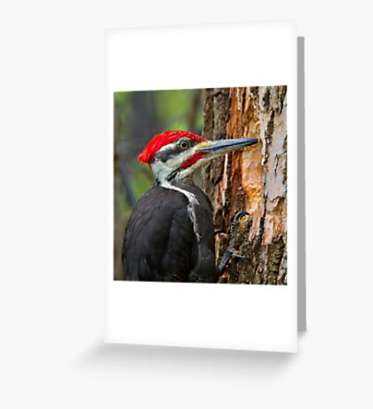 I know you're in there! Greeting Card